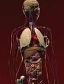 Eisen - wichtig für Körper und Gehirn