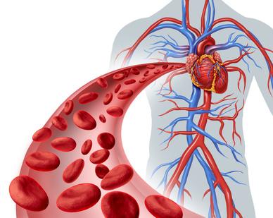 Die neuen ESC Richtlinien empfehlen i.v. Eisensubstitution bei Patienten mit Herzinsuffizienz und Eisenmangel